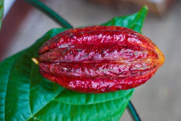 maschera naturale per capelli al cacao