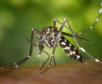 repellente per zanzare fai da te