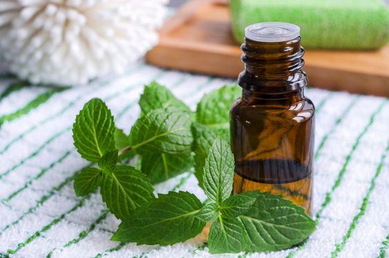benefici olio essenziale di menta