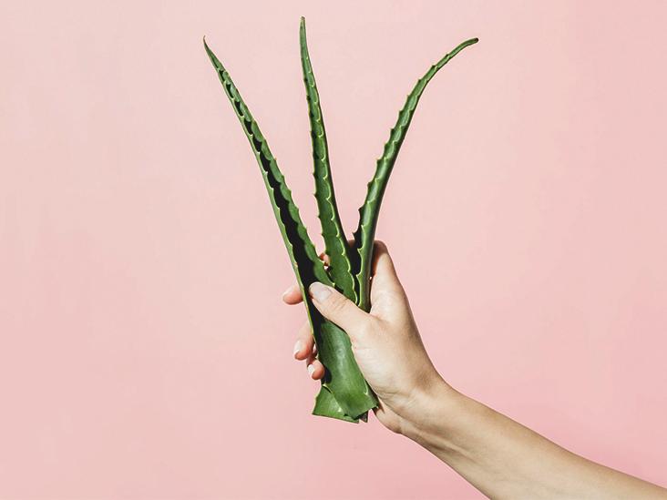 Le 5 migliori creme viso e corpo a base di Aloe Vera